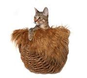 γατάκι καλαθιών λίγα Στοκ Εικόνες