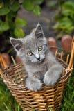 γατάκι καλαθιών Στοκ φωτογραφίες με δικαίωμα ελεύθερης χρήσης