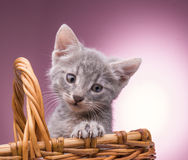 γατάκι καλαθιών λίγα Στοκ φωτογραφίες με δικαίωμα ελεύθερης χρήσης