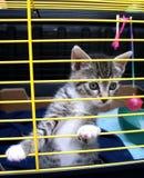 γατάκι κλουβιών Στοκ φωτογραφία με δικαίωμα ελεύθερης χρήσης