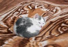 Γατάκι κοιμισμένο σε ένα καρό Στοκ Φωτογραφία