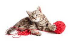 γατάκι κουβαριών που παίζει κόκκινο τιγρέ Στοκ φωτογραφία με δικαίωμα ελεύθερης χρήσης
