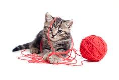 γατάκι κουβαριών σφαιρών που παίζει κόκκινο τιγρέ Στοκ φωτογραφία με δικαίωμα ελεύθερης χρήσης