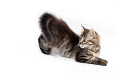 γατάκι λίγα εύθυμα Στοκ Φωτογραφία