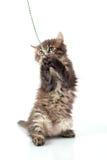 γατάκι λίγα εύθυμα Στοκ Φωτογραφίες