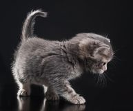 γατάκι λίγα Στοκ εικόνες με δικαίωμα ελεύθερης χρήσης