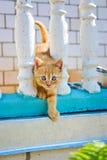 γατάκι λίγα Στοκ Φωτογραφία