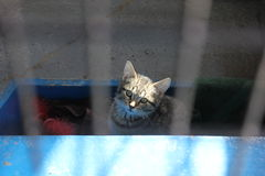 Γατάκι μέσα στην περίφραξη στοκ φωτογραφίες με δικαίωμα ελεύθερης χρήσης