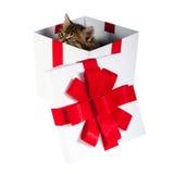 Γατάκι μέσα στο κιβώτιο δώρων στοκ φωτογραφία