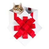 Γατάκι μέσα στο κιβώτιο δώρων στοκ φωτογραφίες