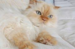 γατάκι μαλακό Στοκ Εικόνες