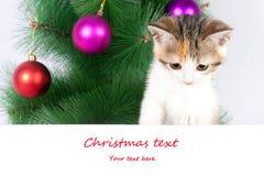 γατάκι με έναν πίνακα δελτίων και ένα κείμενο Χριστουγέννων Στοκ Φωτογραφίες