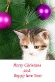 γατάκι με έναν πίνακα δελτίων και ένα κείμενο Χριστουγέννων Στοκ Φωτογραφία
