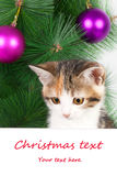 γατάκι με έναν πίνακα δελτίων και ένα κείμενο Χριστουγέννων Στοκ Εικόνες