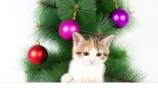 Γατάκι με έναν πίνακα δελτίων στις διακοσμήσεις Χριστουγέννων Στοκ Εικόνες