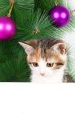 Γατάκι με έναν πίνακα δελτίων στις διακοσμήσεις Χριστουγέννων Στοκ εικόνα με δικαίωμα ελεύθερης χρήσης