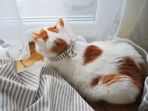 Γατάκι με ένα τόξο στοκ φωτογραφία
