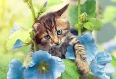 Γατάκι με τα μπλε mallow λουλούδια στοκ φωτογραφίες