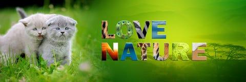 Γατάκι με τη φύση αγάπης κειμένων Στοκ εικόνες με δικαίωμα ελεύθερης χρήσης