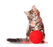 Γατάκι με το κόκκινο κουβάρι του νήματος Στοκ εικόνα με δικαίωμα ελεύθερης χρήσης