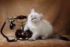 Γατάκι με το τηλέφωνο Στοκ Εικόνες