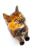 γατάκι μικρό Στοκ εικόνες με δικαίωμα ελεύθερης χρήσης