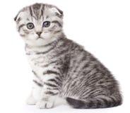 γατάκι μικρό στοκ φωτογραφία με δικαίωμα ελεύθερης χρήσης