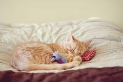 γατάκι μικρό Στοκ Εικόνες
