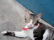 γατάκι μικρό Στοκ φωτογραφίες με δικαίωμα ελεύθερης χρήσης