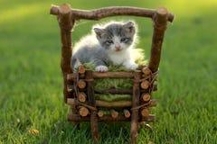 Γατάκι μωρών υπαίθρια στη χλόη Στοκ Εικόνες