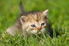 Γατάκι μωρών Στοκ Εικόνες