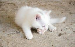 Γατάκι μωρών Στοκ φωτογραφίες με δικαίωμα ελεύθερης χρήσης