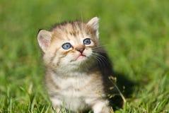 Γατάκι μωρών Στοκ φωτογραφία με δικαίωμα ελεύθερης χρήσης