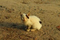 γατάκι μόνο Στοκ φωτογραφία με δικαίωμα ελεύθερης χρήσης