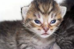 γατάκι νεογέννητο Στοκ Εικόνα