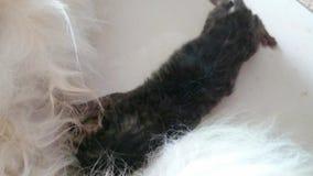 γατάκι νεογέννητο φιλμ μικρού μήκους