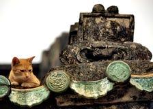γατάκι νυσταλέο Στοκ φωτογραφία με δικαίωμα ελεύθερης χρήσης