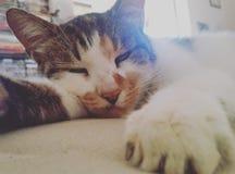 γατάκι νυσταλέο Στοκ εικόνα με δικαίωμα ελεύθερης χρήσης