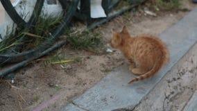 Γατάκι οδών στο πεζοδρόμιο φιλμ μικρού μήκους