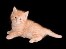 γατάκι οκνηρό Στοκ Φωτογραφίες
