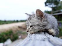 γατάκι οκνηρό Στοκ φωτογραφία με δικαίωμα ελεύθερης χρήσης