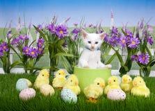 Γατάκι Πάσχας στον κήπο λουλουδιών με τους νεοσσούς στοκ εικόνες με δικαίωμα ελεύθερης χρήσης