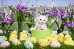Γατάκι Πάσχας στον κήπο λουλουδιών στοκ εικόνα με δικαίωμα ελεύθερης χρήσης