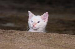 γατάκι πέρα από το λευκό βημ Στοκ φωτογραφία με δικαίωμα ελεύθερης χρήσης