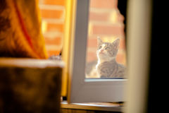 Γατάκι πίσω από το γυαλί Στοκ φωτογραφία με δικαίωμα ελεύθερης χρήσης