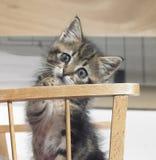 γατάκι παχνιών ξύλινο Στοκ εικόνες με δικαίωμα ελεύθερης χρήσης