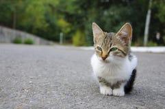 γατάκι περιπλανώμενο Στοκ Εικόνα