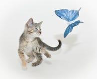γατάκι πεταλούδων στοκ φωτογραφίες