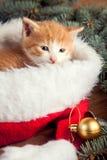 Γατάκι πιπεροριζών στο καπέλο santa στα πλαίσια Χριστουγέννων Στοκ Εικόνες