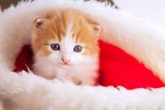 Γατάκι πιπεροριζών στο καπέλο santa στα πλαίσια Χριστουγέννων Στοκ Φωτογραφία